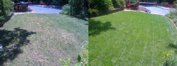 Organic Lawn Treatment Services in Irwin, Leetsdale, Sewickley, Westlake Village, Oakmont Pennsylvania by Clean Air Lawn Care Pittsburgh - Before-and-After Results