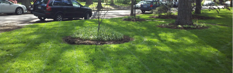 Health, Safe Lawn Care in Pittsburgh